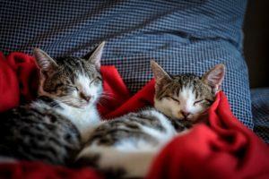 kattenurine meubels verwijderen